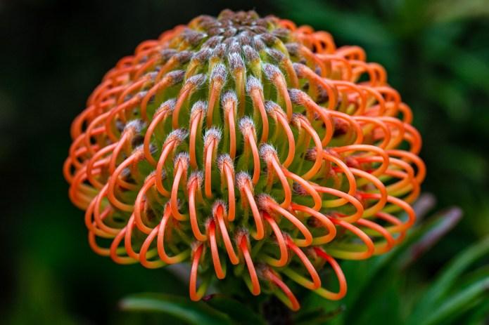 Botanical 5x7