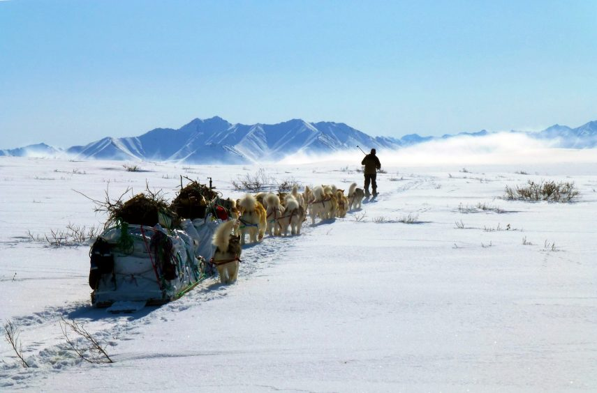 Joe Henderson skis ahead of 22 Alaskan Malamutes towards Brooks Range in ANWR during Arctic expedition