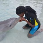 A Day With The Dolphins 2