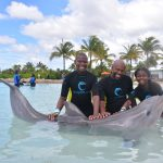A Day With The Dolphins 3