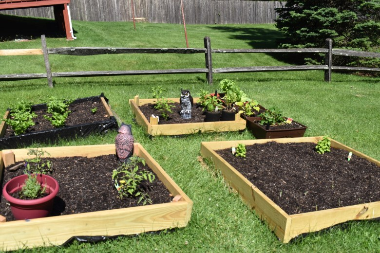 quarantine vegetable and herb garden as part of detoxing the home