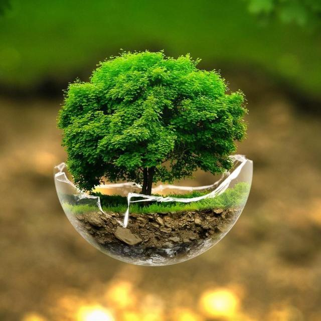 5 ways to make Mother Earth Smile