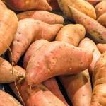 Garnet sweet potatoes