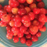 bowl of sour cherries