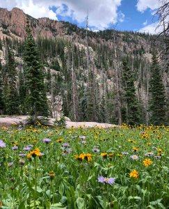 Wildflower meadow near Slide Lake