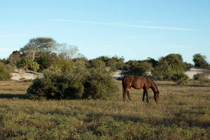 Cumberland-wild horse