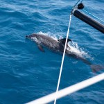 dolphin escorts our boat into US waters