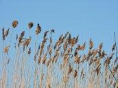 Grasses Breitbeck Park
