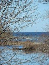 marsh Lake Ontario
