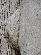 tree union RHL