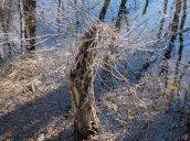 treestump RHL