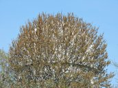 watertower tree Fulton