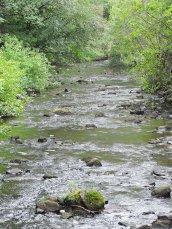 burbling Rice Creek Fallbrook