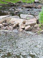 Rice Creek Fallbrook Oswego State2