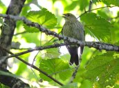 bird Granby Getaway Trail