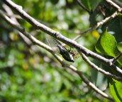 cicada Granby Getaway