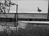 duck docks North Bay