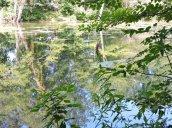 Oswego Canal Towpath Great Bear