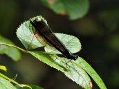 pretty bug Granby