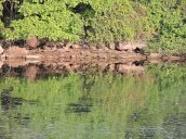reflecitons Oswego River Fulton