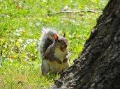 squirrel Recreation Park
