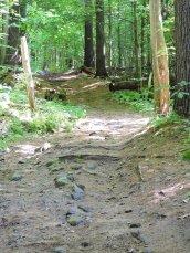trail Great Bear