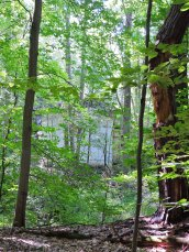 woods Great Bear