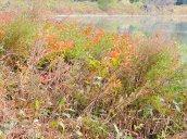 fall colors Lake Neatahwanta
