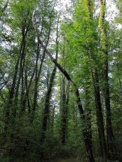 trees Ground Hog Lane