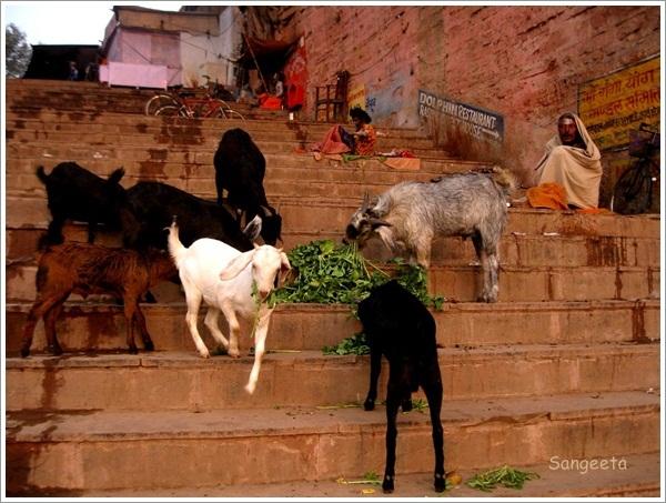 Boat Ride Varanasi Ghat