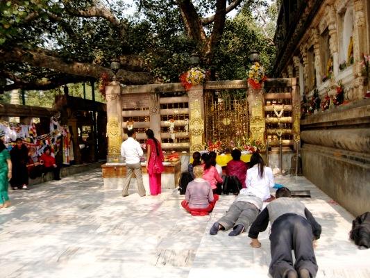 Bodhgaya Mahabodhi Tree