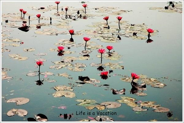 Kapilvastu-Lotus Pond