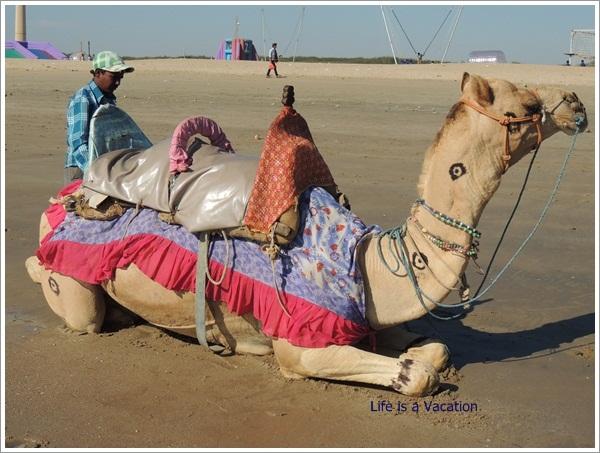 Mandvi Trip Beach Camel