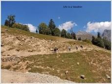 Kashmir Trek Sonmarg