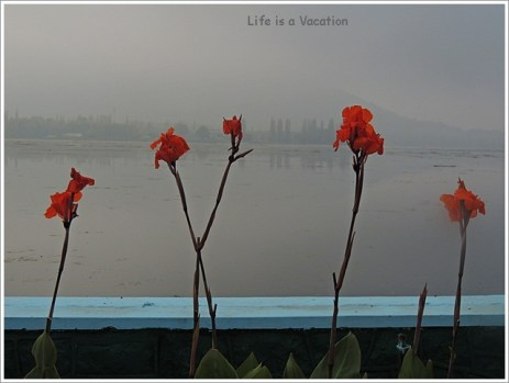 Dal Lake Flowers
