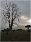 Char Chinar Dal Lake