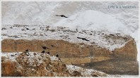 Chadar Trek Zanskar Ladakh