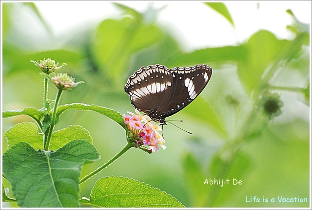 Kolkata Botanical Garden