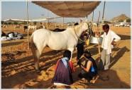 Pushkar Mela Fair 2014 Rajasthan Horse Trade