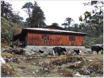 Goechala-Khokchurang Trek Hut