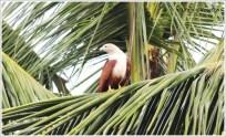Kerala Birds near Backwater