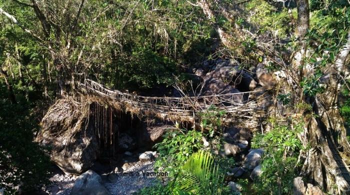 Double Decker Root Bridge - Sohra Meghalaya