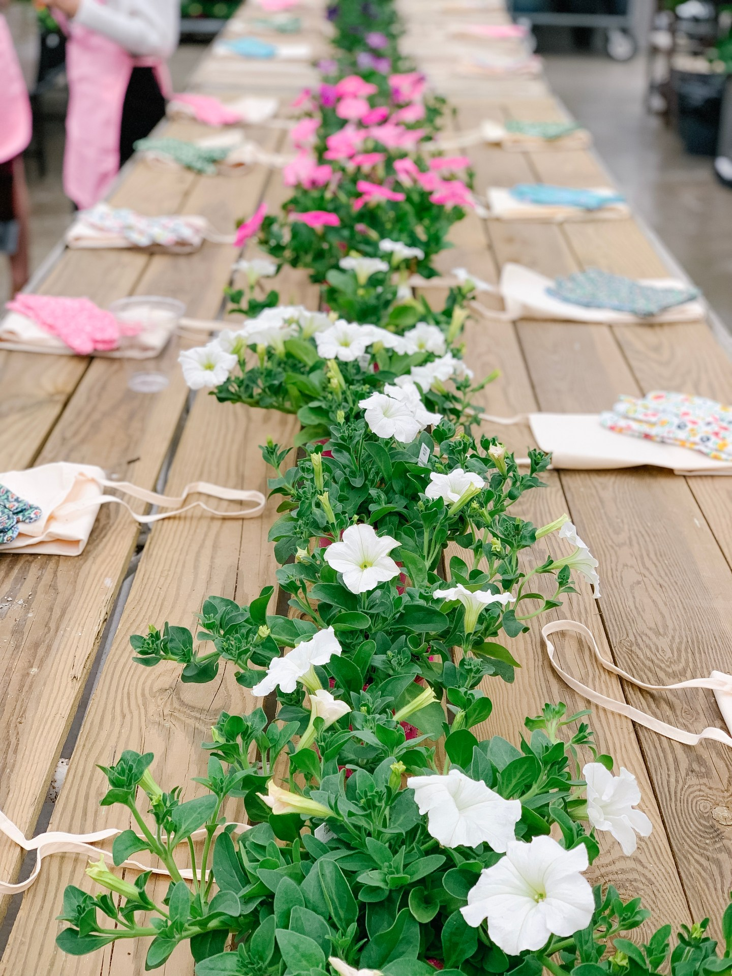 Wave Petunias: A Potting Party