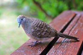 Diese kleinen Vögel besuchten uns täglich und fraßen Brötchenkrümel aus unserer Hand.