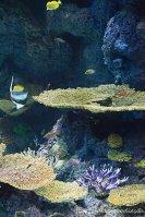 Vielfältige Korallen