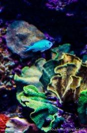 Bunte Unterwasserwelt