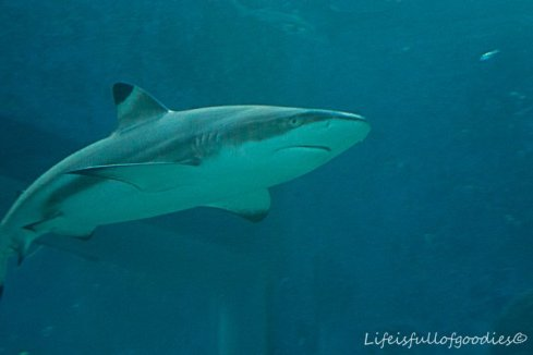 Haie gibt es im Aquarium natürlich jede Menge