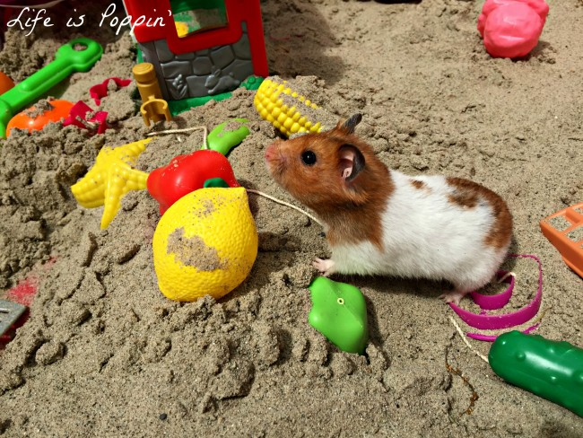 Little Tikes Cozy Coupe Sandbox Review 3