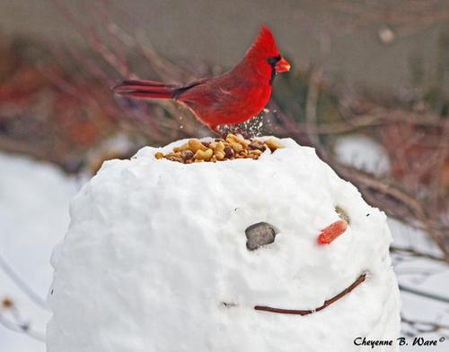 Bird Feeder Snowman