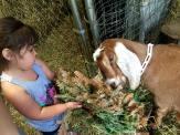Goats15
